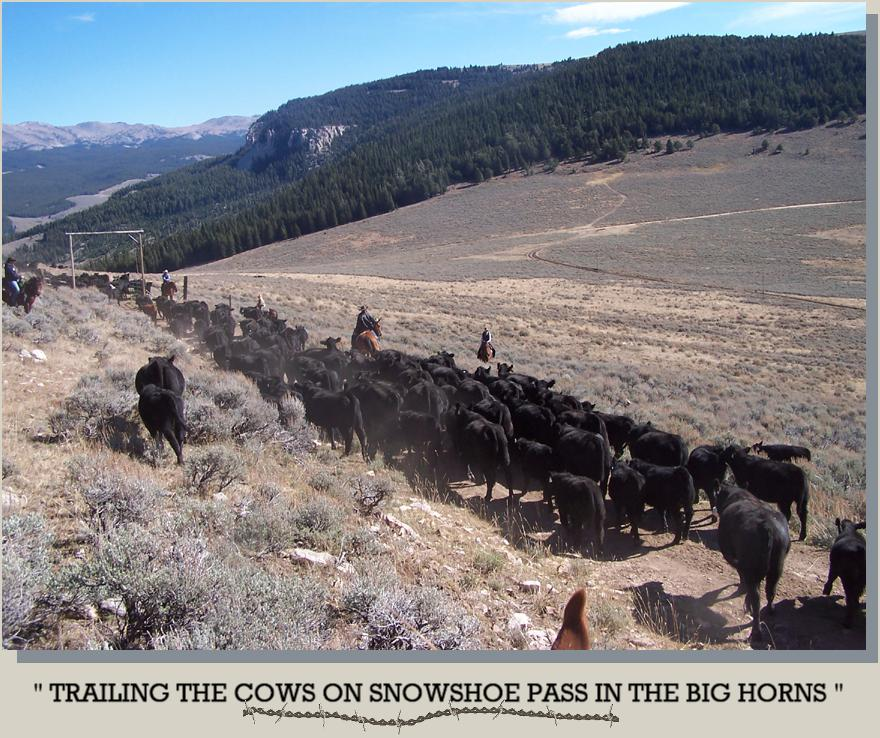 Trailing the Cows on Snowshoe Pass in the Big Horns